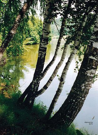 Абрамовские пруды